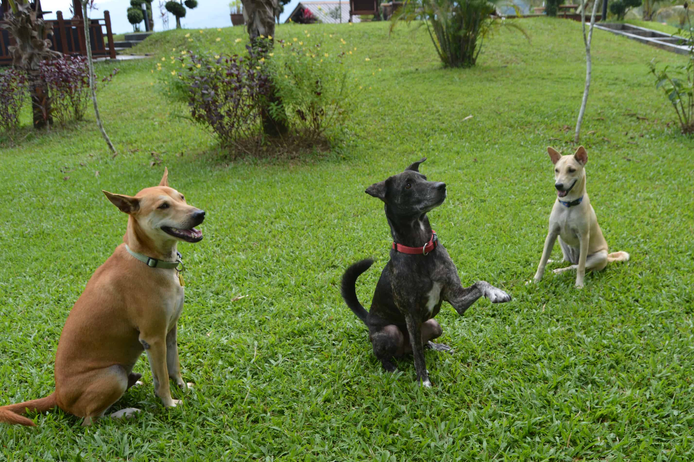 Sunset Valley Holiday Houses Dog Patrol!