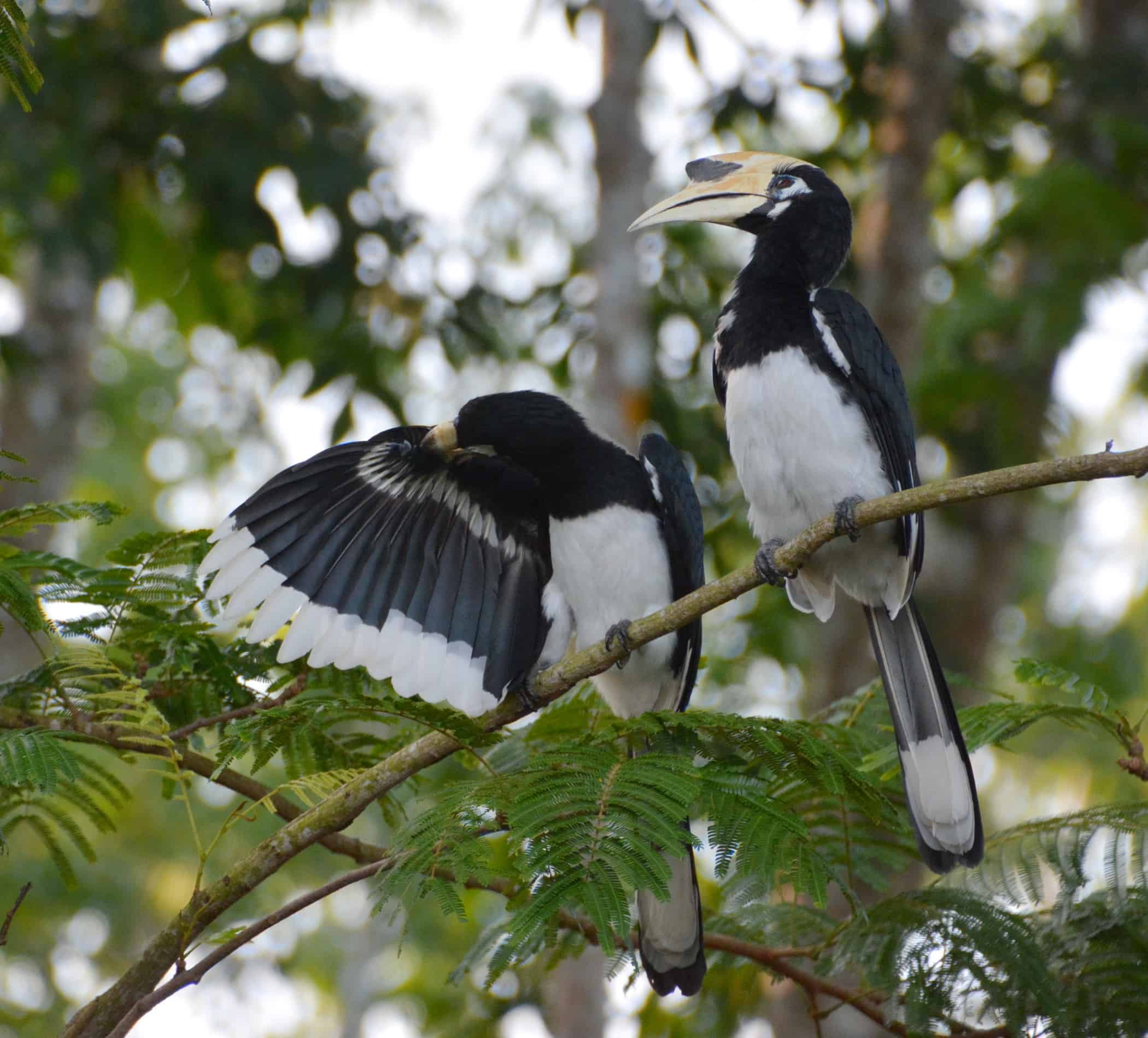 Sunset Valley Holiday Houses - Hornbills