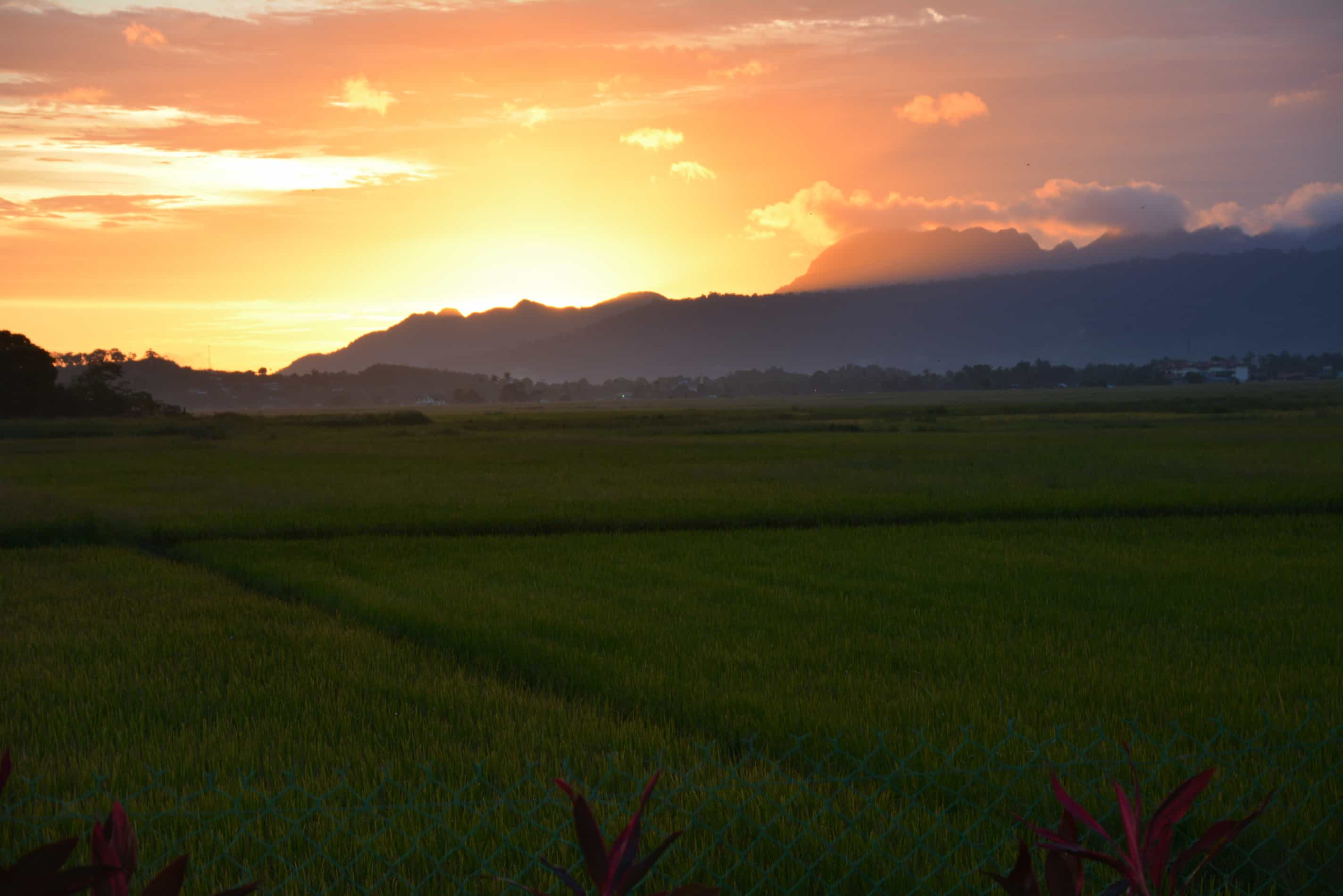 Sunset Valley Holiday Houses - rice paddy sunset